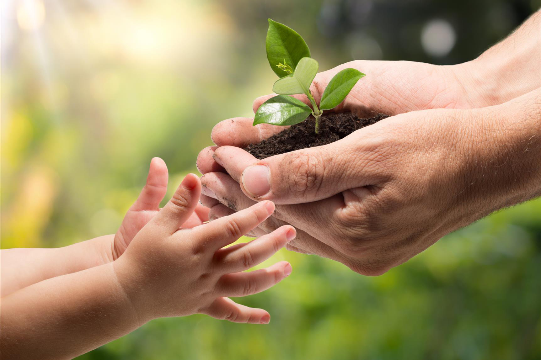 Image result for parent and child planting tree